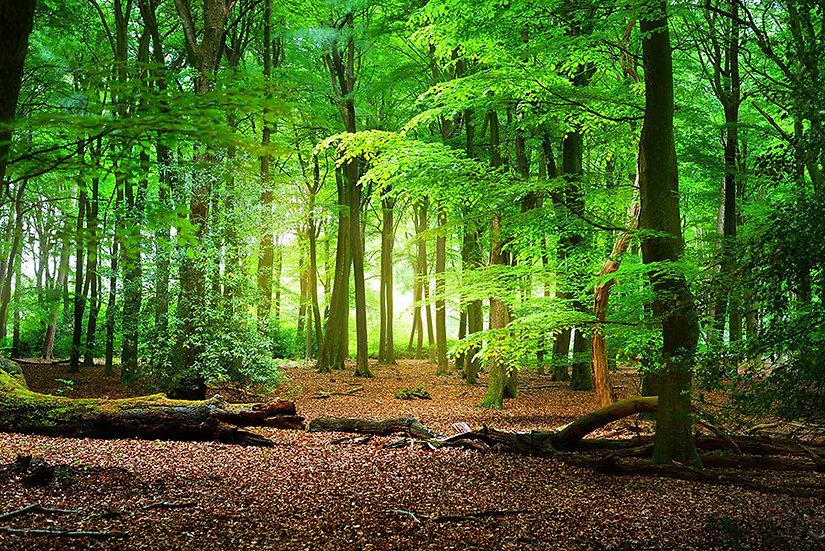 Yeşil Çam Ağaçları Duvar Kağıtları   Duvar Kağıtları Eskişehir   Duvar34.com
