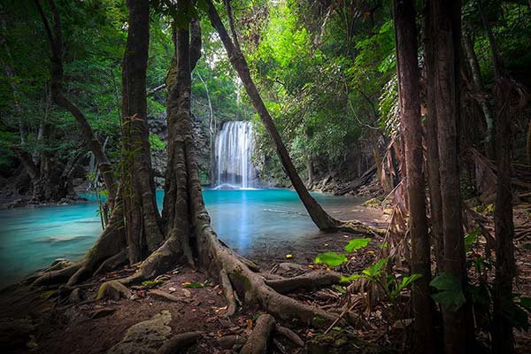 Üç Boyutlu Yaşlı Orman Duvar Kağıtları | En İyi Nehir Duvar Kağıtları | Trabzon