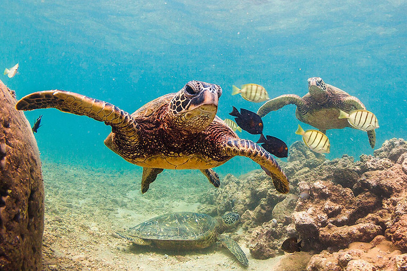 En Ucuza Hayvan Duvar Kağıtları | Üç Boyutlu Su Kaplumbağası Duvar Kağıtları