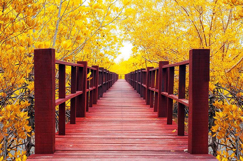 Sonbahar Yaprakları Tahta Yol Duvar Kağıdı | Duvar Kağıtları Iğdır | Duvar34.com