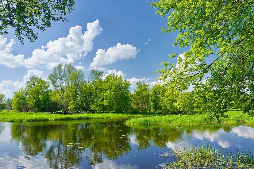 Orman Bahçesi Duvar Kağıdı   3 Boyutlu Nehir Parkı Duvar Kağıdı   Fethiye
