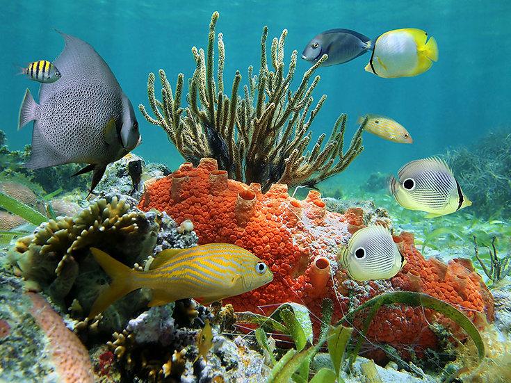 Su Altı Tutkunları İçin Duvar Kağıtları | Üç Boyutlu Balık Akvaryum Duvar Kağıdı