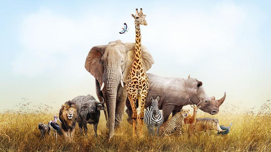 Hd Hayvanlar Alemi Duvar Kağıtları | Üç Boyutlu Vahşi Hayvanlar Duvar Kağıtları