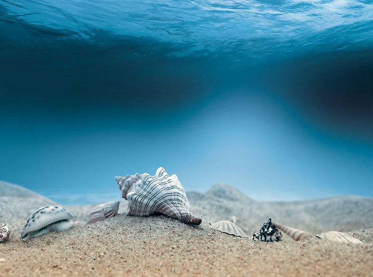 3 Boyutlu Okyanus Manzara Duvar Kağıdı | HD Deniz Kabuğu Duvar Kağıdı | Kayseri