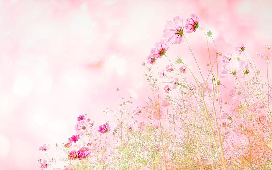 Mor Çiçek Bahçesi Duvar Kağıtları | Antalya Duvar Kağıtları | Duvar34.com