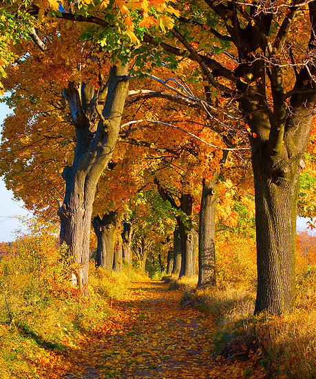 3 Boyutlu Doğa Manzara Duvar Kağıtları   Sarı Yapraklı Manzara Duvar Kağıtları