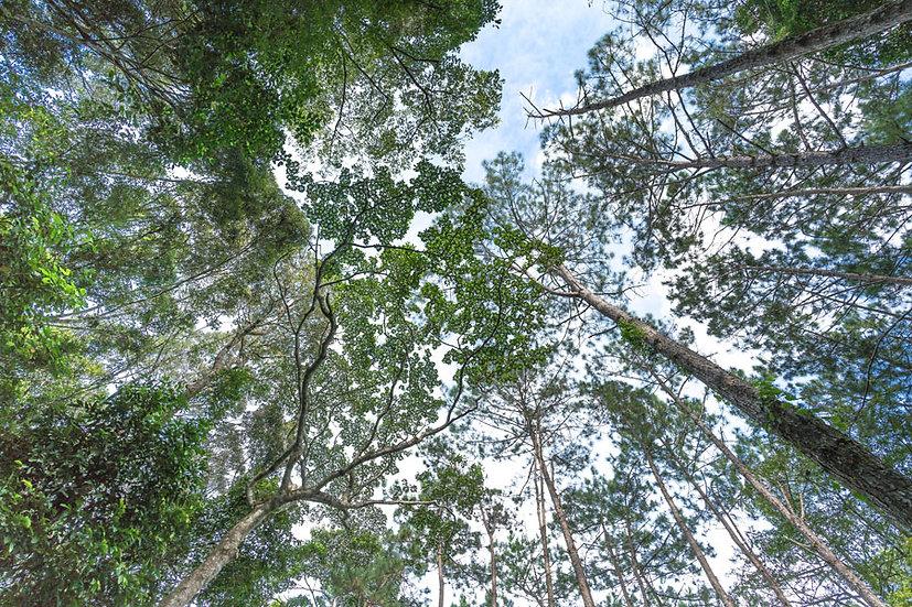 Orman Ağaçları Duvar Kağıtları | 3D Yeşil Orman Vadisi Duvar Kağıtları