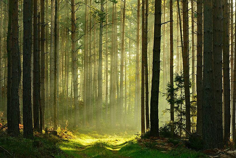 Güneş Işığı Orman Yansıma Duvar Kağıtları | 3 Boyutlu Muğla Duvar Kağıtları
