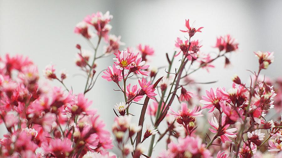 Bahar Çiçekleri Manzara Duvar Kağıtları | 3D Gaziantep Duvar Kağıtları