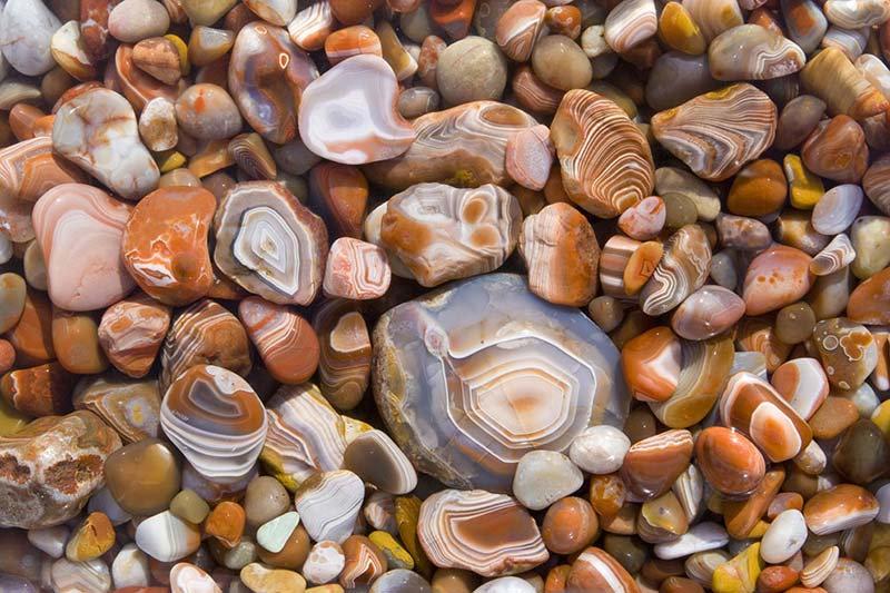 Deniz Kabukları Duvar Kağıdı | Oturma Odası Duvar Kağıtları | Duvar34.com
