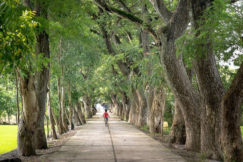 3 Boyutlu Tai Duvar Kağıtları | Doğa Parkı Duvar Kağıtları | Tayland