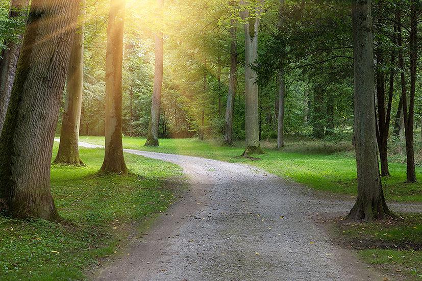 Ormana Yansıyan Güneş Işını Duvar Kağıdı | 3D Duvar Kağıtları | Germany