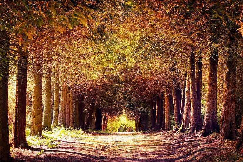3Boyutlu Sonbahar Mevsim Manzara Duvar Kağıtları | Güneş Manzara Duvar Kağıtları