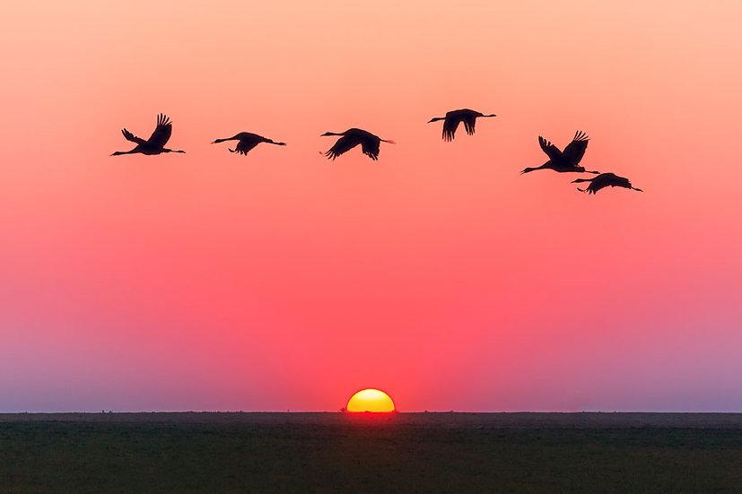 HD Flamingo Göçü Duvar Kağıtları   3 Boyutlu Gün Batımı Duvar Kağıtları