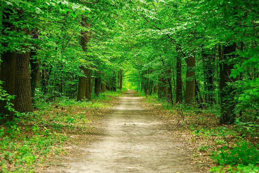 3 Boyutlu Sihirli Orman Yolu Duvar Kağıdı   Orman Manzara Duvar Kağıdı   Ağrı
