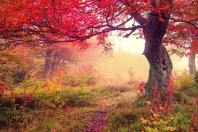 Kırmızı Ağaç Toprak Yol Duvar Kağıdı | 3 Boyutlu Muğla Duvar Kağıtları