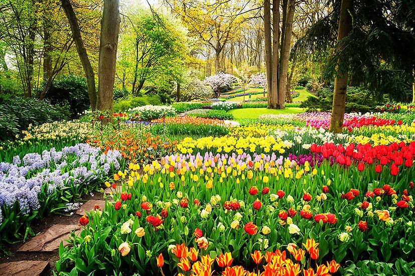 Çiçek Duvar Kağıtları Hd | Botanik Parkı Manzara Duvar Kağıtları | Malatya