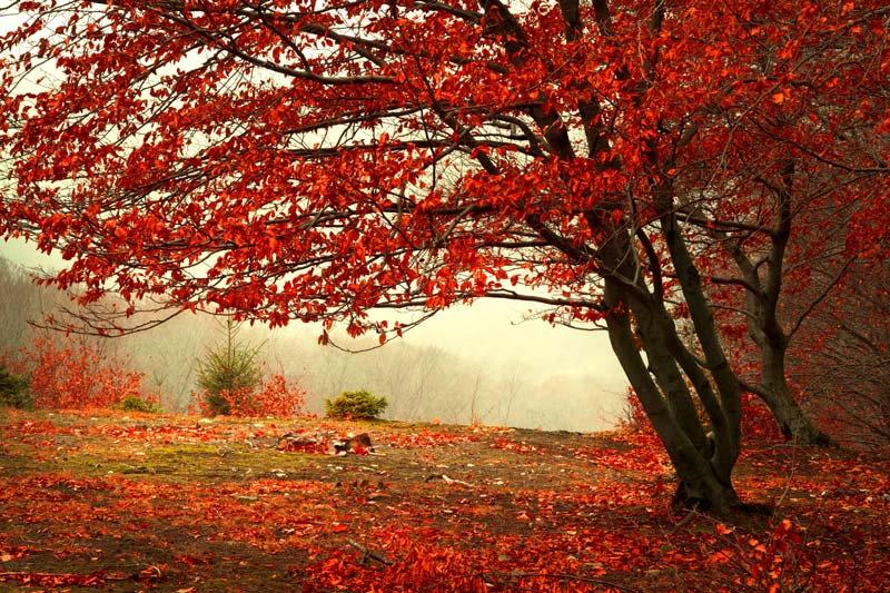 Manzara 3d Duvar Kağıdı | Kırmızı Ağaç Manzara Duvar Kağıtları | İskenderun