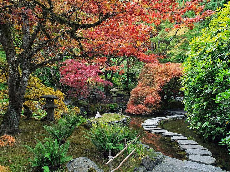 3d Ağaç Manzaralı Orman Duvar Kağıtları | Botanik Bahçesi Duvar Kağıtları