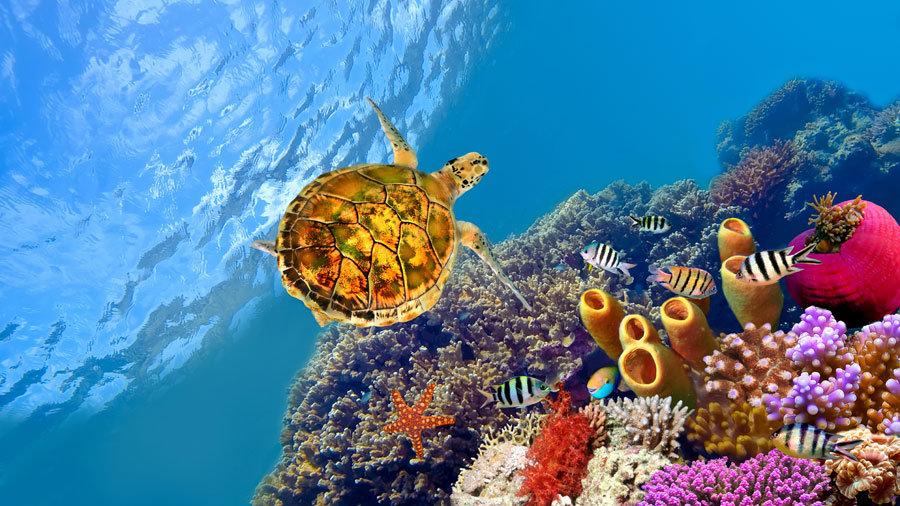 Deniz Kaplumbağası Manzara Duvar Kağıtları | 3 Boyutlu Balıkesir Duvar Kağıdı