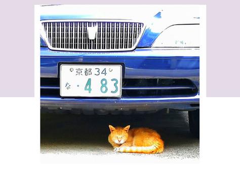 A Neighbor's Cat