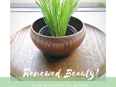 Renewed Beauty!