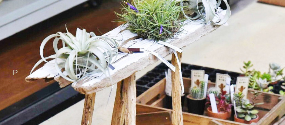 Dead Branches Turned Plant Stand