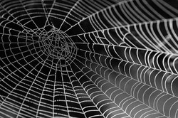spider-web-with-water-beads-921039_960_720