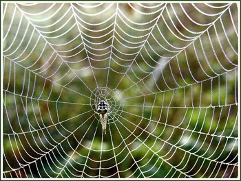 spiders-webs