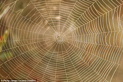 2EDAD67400000578-3336268-Analysing_spider_web_DNA_could_be_used_by_ecologists_to_identify-a-43_14486