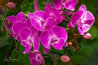 Orchids6.jpg