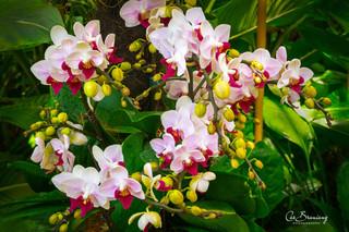 Orchids-1.jpg