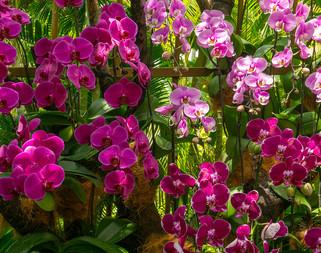 Orchids3 .jpg
