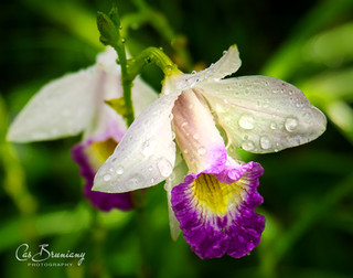 Orchids2 .jpg