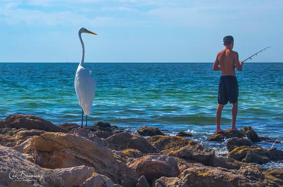 Sarasota - Lido Beach