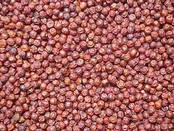 Red Kampot Pepper 1 KG- Sindora