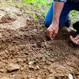 El-Cajon-Landscaping-Services.jpg