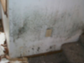 mold pictures Aspergillus-on-painted-wall