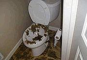 bacteria toilet, sewer bacteria, sewage, raw sewage, bacteria contamination