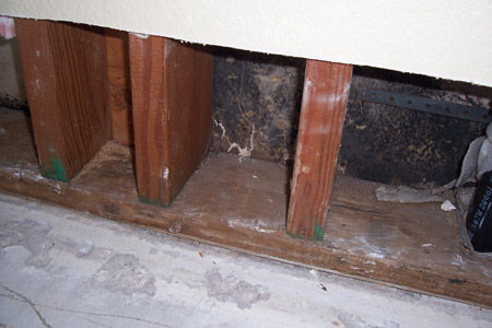 mold growing in wall Stachybotrys-on-drywall-inner-wall-cavity