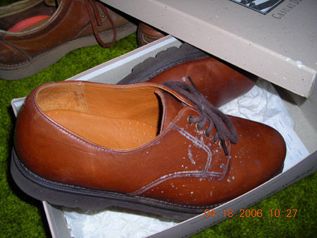 Penicillium mold growing-on-shoes