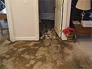 bacteria in carpet