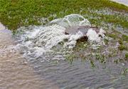 bacteria from sprinkler back up