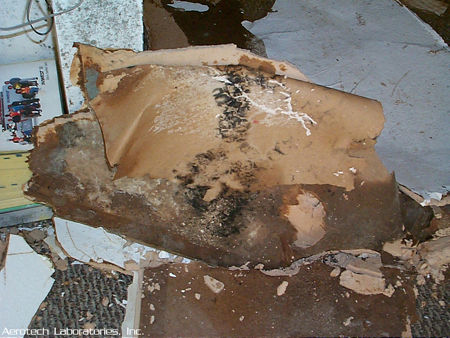 mold pictures Mixed-colonization-Aspergillus-Stachybotrys-Penicillium-on-collapsed-drywall-and-ceiling