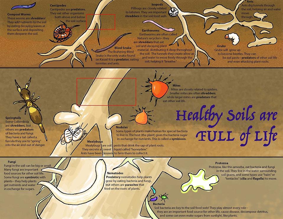 Soils_COLOR1.jpg