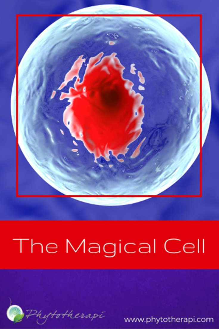 The Magical Cell