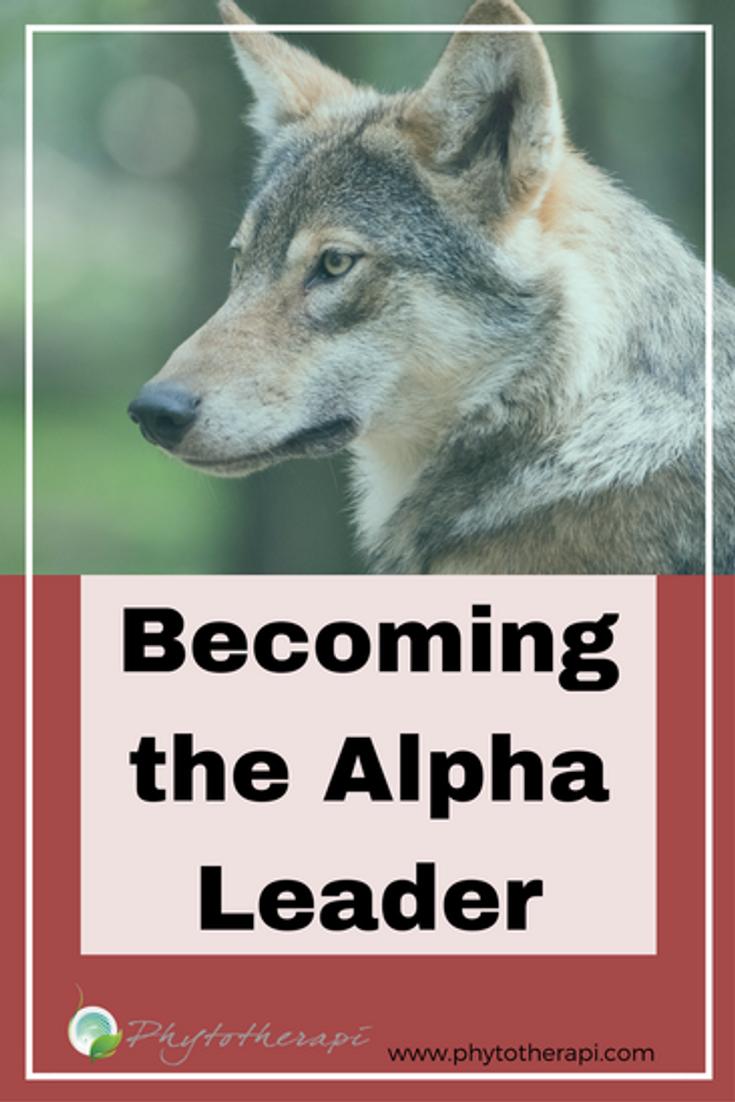 Alpha Leader Blog Cover