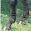 Thumbnail: Set of leather tendon and fetlock boots, Brown, Small