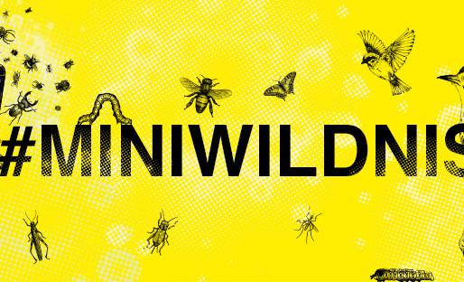 Eine Kampagne für mehr Wildnis!