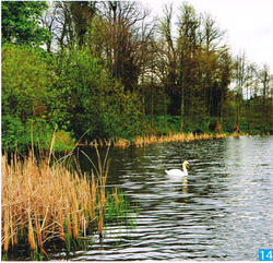 Corkagh Park